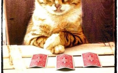 Funny Magic Tricks With Animals